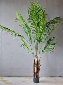 Bilde av Kunstig plante, Palme 180 cm