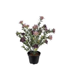 Bilde av Succulent 30 cm