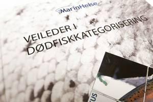 Bilde av Veileder i dødfiskkategorisering