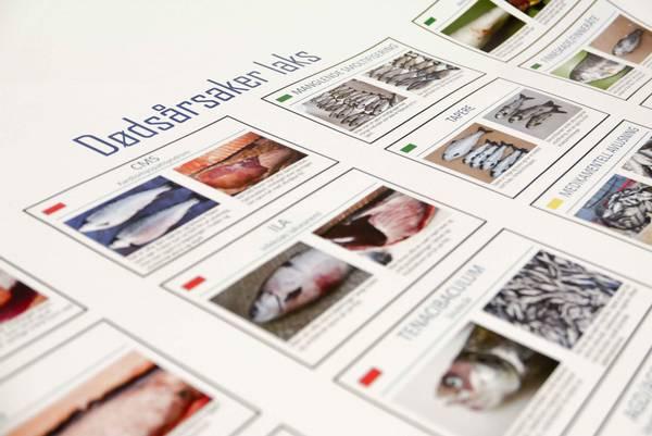 Plakat over dødsårsaker hos laks (liten)