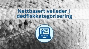 Bilde av Nettbasert veileder i dødfiskkategorisering