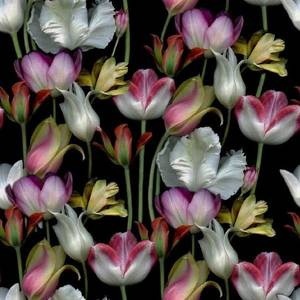 Bilde av Jersey digital fargerike tulipaner