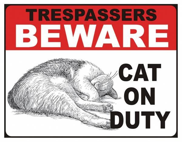 Bilde av Cat On Duty