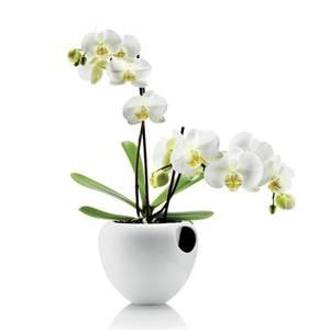 Bilde av Eva Solo orkidepotte