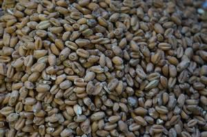 Bilde av Pale Wheat 25 kg
