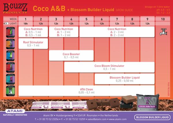 B'cuzz Coco, A+B