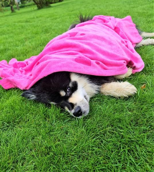 Hundehåndkle Rosa