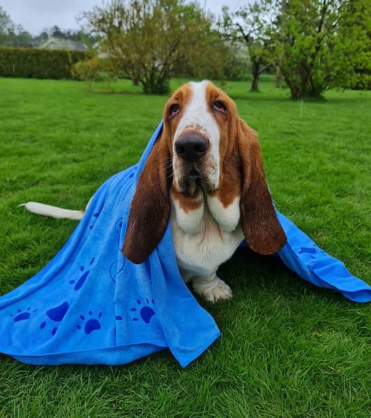 Bilde av Hundehåndkle Blå