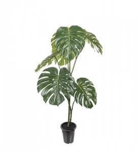 Bilde av Mr Plant Monstera 120 cm