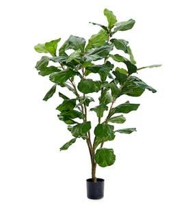 Bilde av Mr Plant Fiolfiken 120 cm