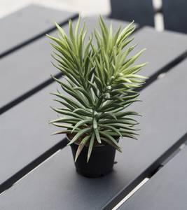 Bilde av Mr Plant Sukkulent