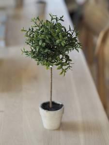 Bilde av Mr Plant Krydderplante