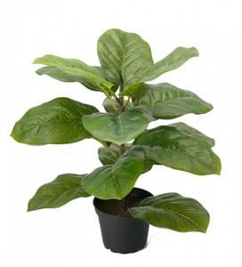 Bilde av Mr Plant Fiolfiken 40 cm