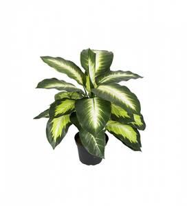 Bilde av Mr Plant Prikkblad