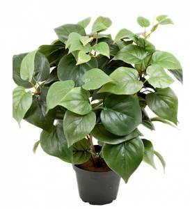 Bilde av Mr Plant Philodedron