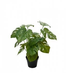 Bilde av Mr Plant Monstera