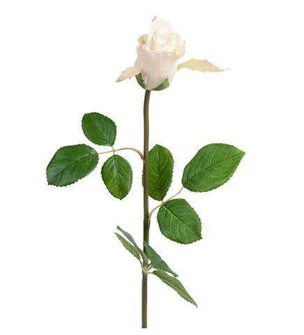 Bilde av Rose hvit