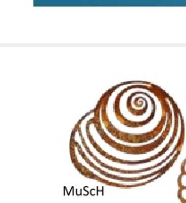 Bilde av Sneglehus til oppheng MuSch