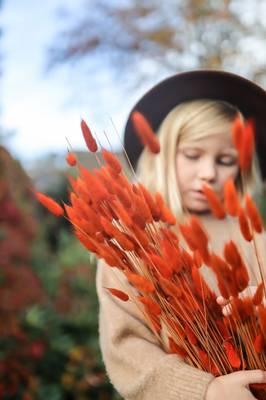 Bilde av Lagurus oransje