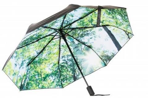 Bilde av Paraply Forest