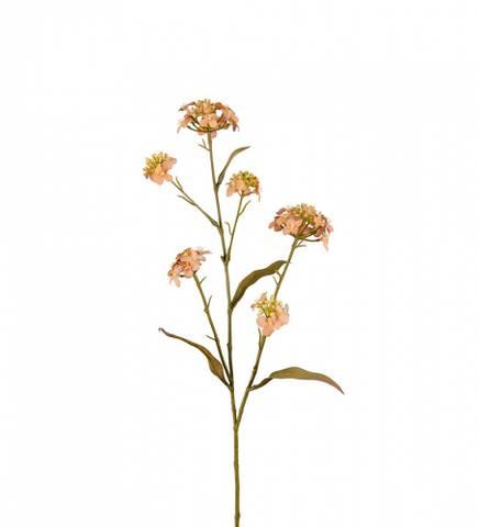 Bilde av Blomster Iberis rosa/beige
