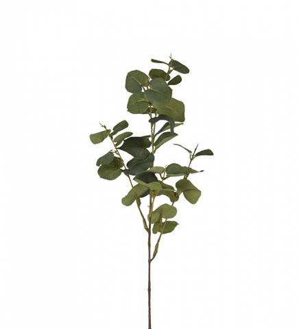 Bilde av Eukalyptus 70 cm