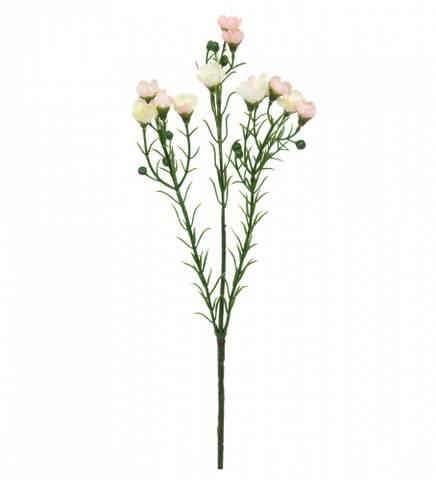 Bilde av Voksblomst rosa
