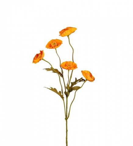 Bilde av Valmue gul