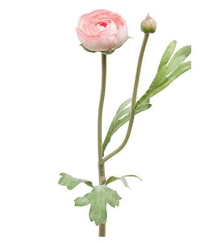 Bilde av Ranunkel lys rosa