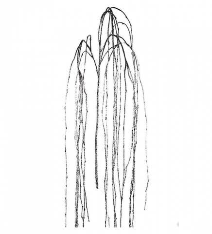 Bilde av Kvist med rimfrost