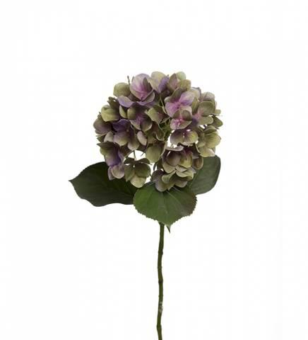 Bilde av Hortensia purple