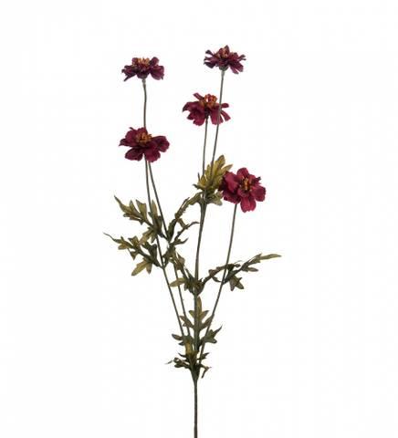 Bilde av Coreopsis purple