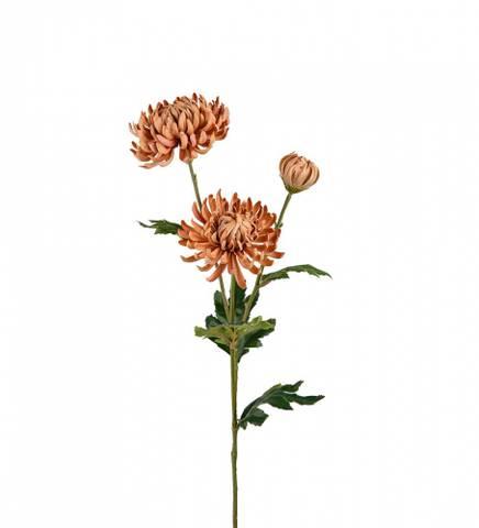 Bilde av Chrysanthemum beige