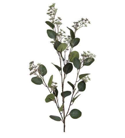 Bilde av Eukalyptus gren med blomster