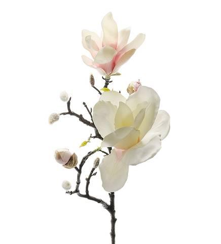 Bilde av Magnolia rosa