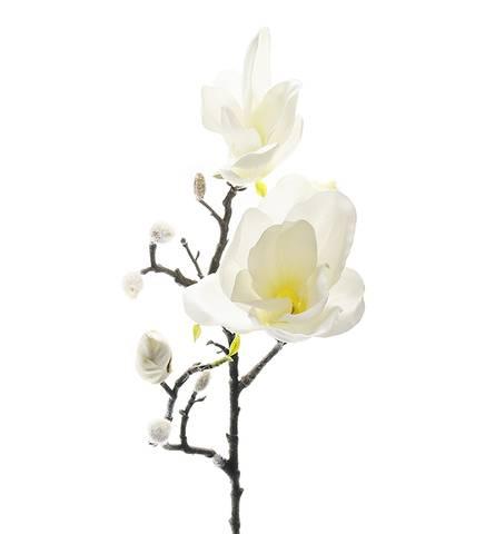 Bilde av Magnolia hvit