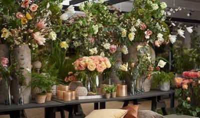 Bilde av Chrysanthemum