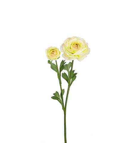 Bilde av Ranunkel lys gul