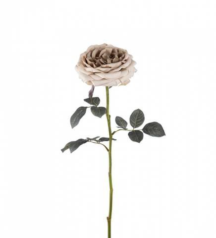 Bilde av Rose beige