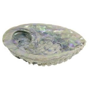 Bilde av Abalone shell Haliotis Midae XL