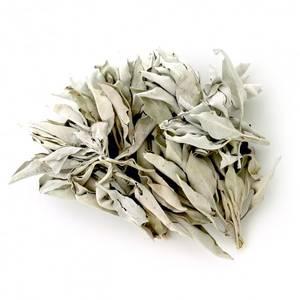 Bilde av Hvit salvie (White Sage) smudge, liten 9-10 cm