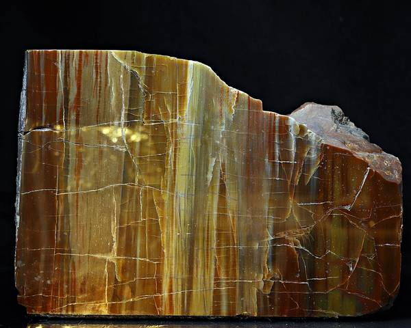 Bilde av Forsteinet tre fra USA