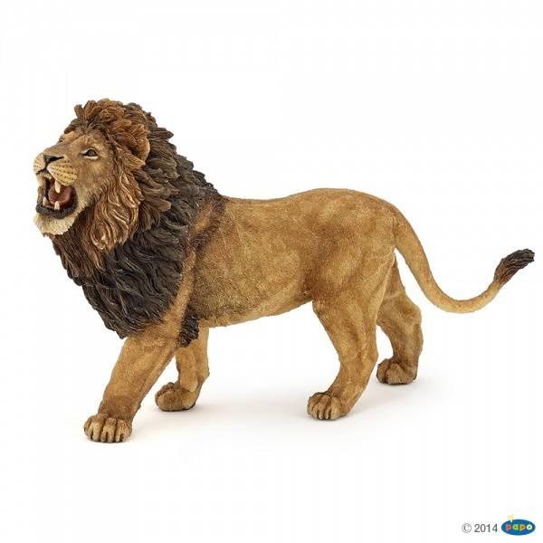 Bilde av Løve, brølende hann (Panthera leo)