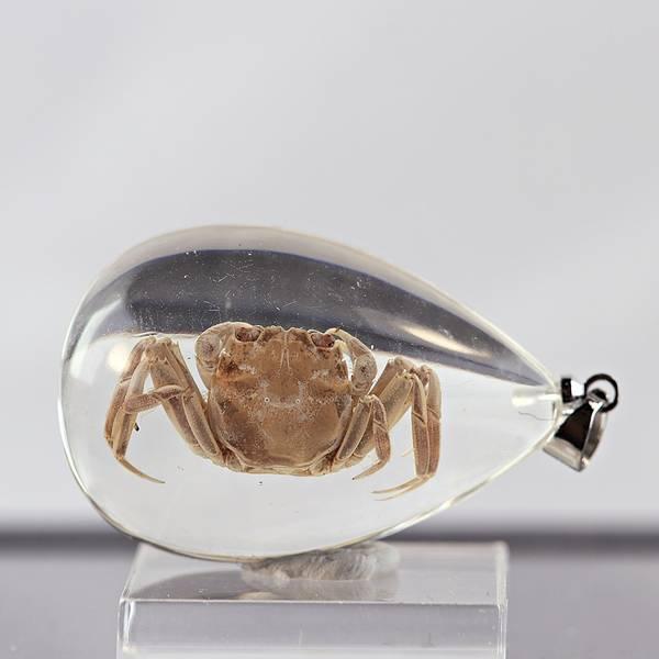 Bilde av Småkrypanheng - krabbe