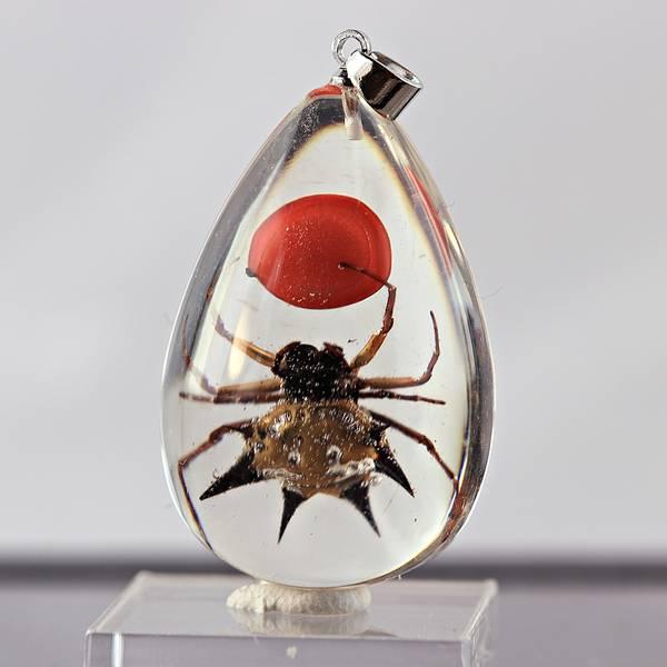 Bilde av Småkrypanheng - edderkopp