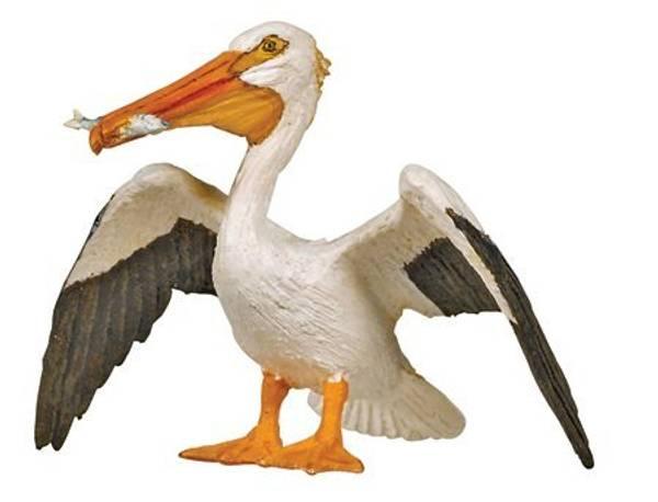 Bilde av Hvit pelikan (Pelecanus onocrotalus)