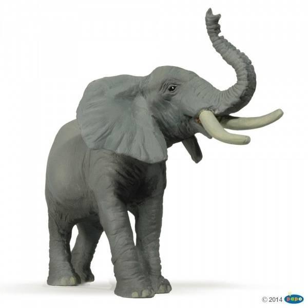 Bilde av Afrikansk elefant, snabel opp (Loxodonta africanus)