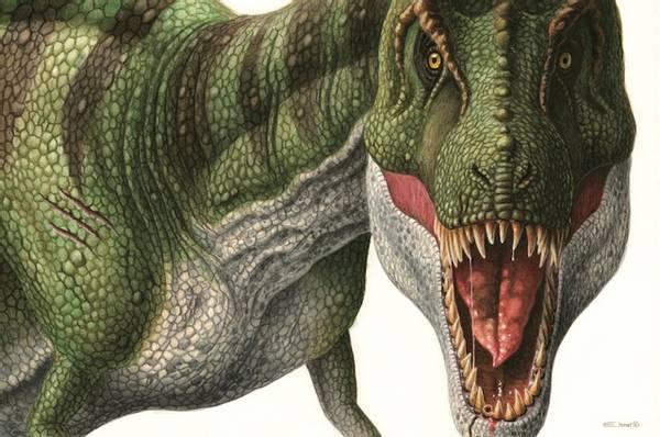 Bilde av Tyrannosaurus rex - plakat