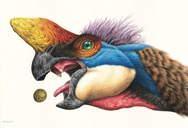 Bilde av Oviraptor - plakat