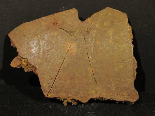 Bilde av Fossilt skallfragment fra skilpadde